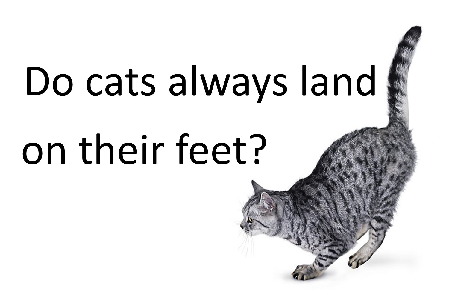 Do Cats Always Land On Their Feet