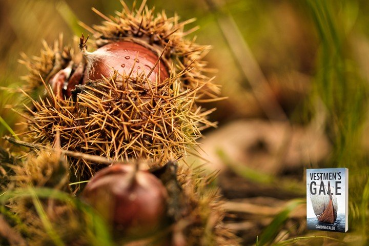 Chestnuts with prickly petals partially peeled back.